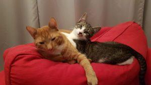 Arie en Kenny